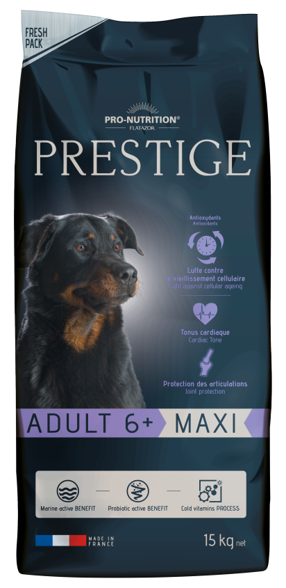Adult 6+ Maxi