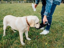Chien - agility dog